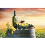 Sissejuhatav koolitus veinimaalima 8.oktoober 2021